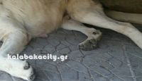 Δικηγόρο όρισε ο Δήμος Καλαμπάκας για την υπόθεση δηλητηρίασης των αδέσποτων ζώων